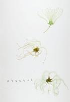 100 x 70 cm. Watercolour, pencil