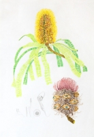 100x70cm. Watercolour, pencil.